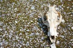停止的母牛 免版税库存照片