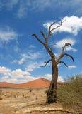 停止的沙漠namib结构树 免版税库存图片