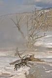 停止的温泉结构树 免版税图库摄影