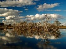 停止的湖反射的结构树 免版税库存照片