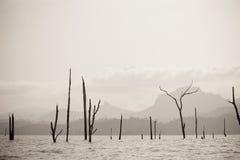 停止的湖结构树 图库摄影