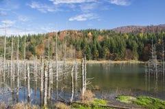 停止的湖结构树 免版税库存图片