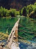 停止的湖 免版税库存图片