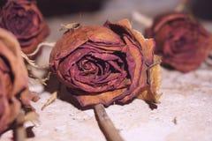 停止的玫瑰 库存图片