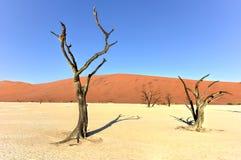 停止的纳米比亚vlei 库存图片