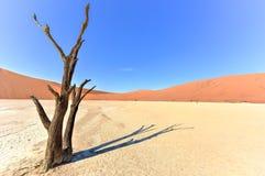 停止的纳米比亚vlei 免版税库存照片