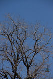 停止的结构树和蓝天 免版税图库摄影