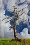 停止的结构树在一个多云天空背景中。 免版税库存照片