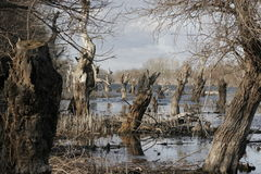 停止的结构树在死水 库存照片