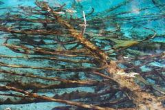 停止的结构树在水中 库存图片