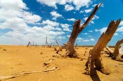 停止的结构树在沙漠荒原 免版税库存照片