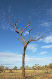 停止的结构树 图库摄影