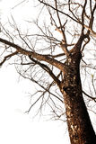 停止的结构树 免版税图库摄影