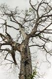 停止的结构树 免版税库存图片