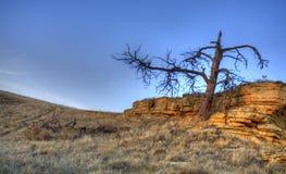 停止的结构树 库存照片