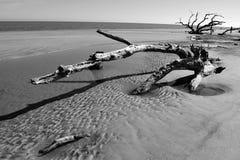 2停止的老结构树 图库摄影