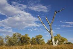 停止的老结构树 免版税图库摄影