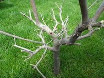 停止的老结构树 库存图片
