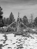 停止的老结构树 免版税库存图片