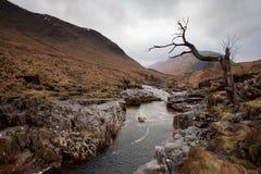停止的苏格兰结构树 库存照片