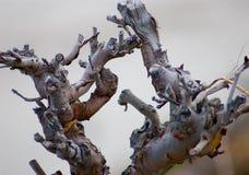 停止的葡萄海运 免版税图库摄影
