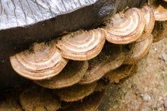 停止的蘑菇木头 免版税库存图片
