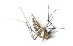 停止的蚊子 图库摄影