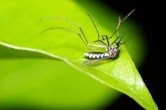 停止的蚊子 免版税库存图片