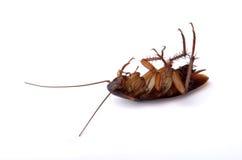 停止的蟑螂 库存图片