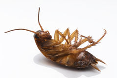 停止的蟑螂 免版税库存图片