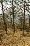 停止的赤裸春天等待的木头 免版税图库摄影