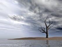 停止的赤裸结构树 图库摄影