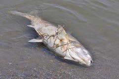 停止的鱼浮动的水 库存照片