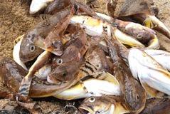 停止的鱼虾虎鱼 库存图片