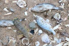 停止的鱼 免版税库存照片