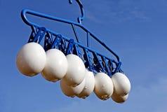 停止的鸡蛋 免版税库存图片