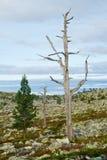 停止的结构树二 免版税库存图片