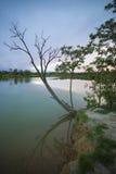 停止的结构树02 库存照片