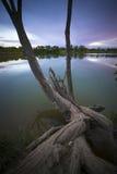 停止的结构树01 免版税库存图片