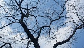 停止的阴沉的结构树 免版税库存图片