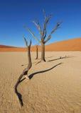 停止的deadvlei结构树 免版税库存图片