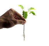 停止破坏树 免版税库存图片