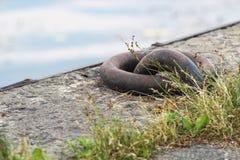 停泊与对此栓的绳索的圆环 与一个坚实铁圆环的接近的图象用于获取停住在船坞的船 免版税库存照片