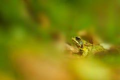 停泊青蛙 库存照片