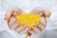 停滞黄色郁金香关闭的女性手 免版税库存照片