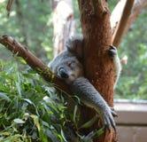 停留在动物园 免版税库存照片