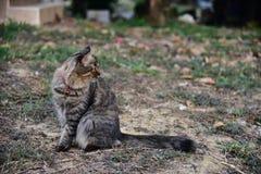停留在地面和看见的猫 库存照片