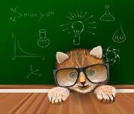停留在桌附近的黑大玻璃的逗人喜爱的猫科学家 免版税库存照片