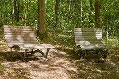停留在森林里 免版税库存图片