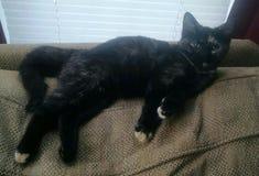 停留杂色猫的小猫 免版税库存图片